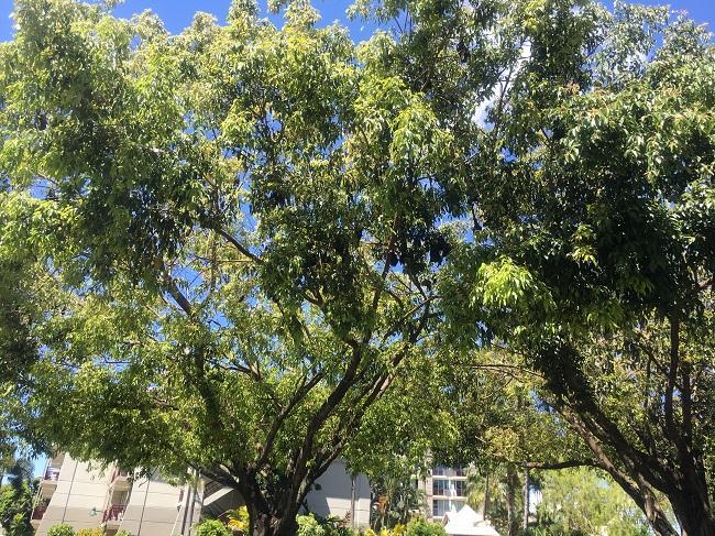 樹に止まって休むコウモリ