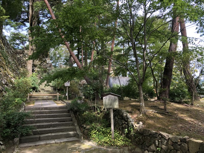 丹波亀山城・光秀が植えたイチョウの木