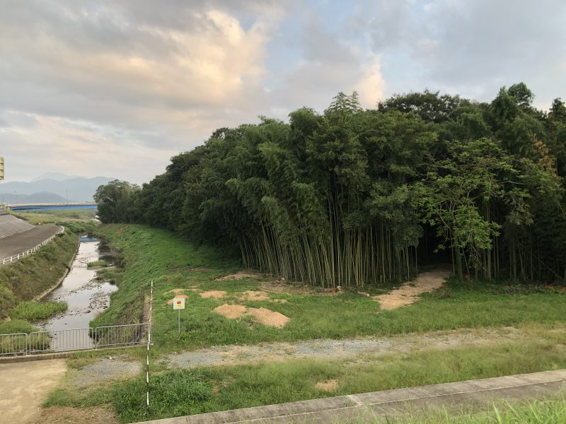 由良川の明智藪